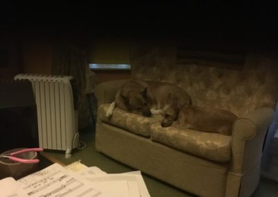 Once I finish recording late at night the dogs alter my scores Honest!